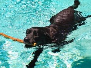 pup swim