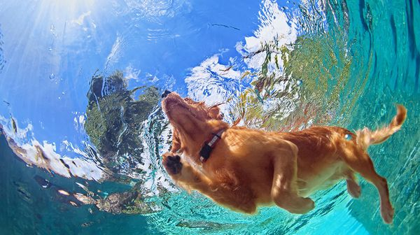 Dog Swimming🐾